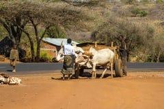 Tanzania kraju życie Obrazy Stock