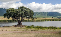 Tanzania lake Stock Photo