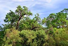 Tanzania, Manyara Stock Photos