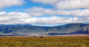 Tanzania meadows Royalty Free Stock Image