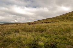 Tanzania meadows Stock Images