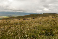Tanzania meadows Stock Image
