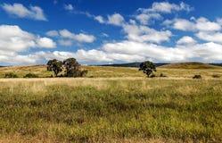 Tanzania meadows Stock Photography