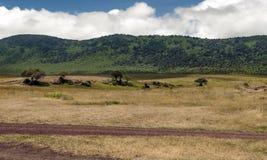 Tanzania meadows Royalty Free Stock Photos