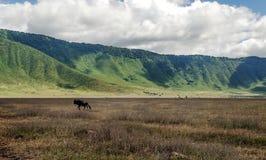 Tanzania meadows Royalty Free Stock Photography