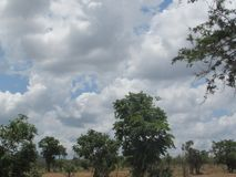 Mikumi national park. It is in Tanzania Royalty Free Stock Images