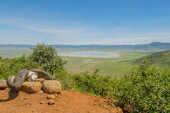Tanzania, Ngorongoro konserwaci teren - Zdjęcia Stock