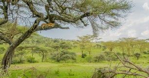 Tanzania - Serengeti National Park Stock Images
