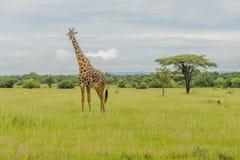 Tanzania - Serengeti National Park Royalty Free Stock Image