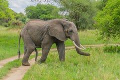 Tanzania - Tarangire National Park Stock Photography