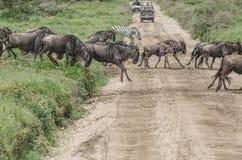 Tanzania stock image