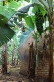 Tanzanian hut stock photo