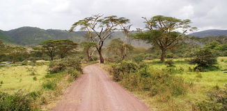 Tanzanian landscape. Road and and African Acacia Stock Images