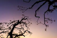 Tanzbaum morgens der Himmel ist ruhig stockbilder
