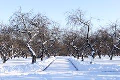 Tanzen-Baum Stockfotos