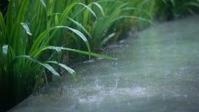 Tanzen in den Regen Stockfoto