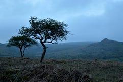 Tanzenbäume Lizenzfreies Stockfoto