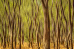 Tanzenbäume Lizenzfreie Stockbilder