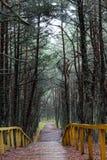 Tanzenwald von Curonian-Spucken Kurshskaya-kosa, Kaliningrad, Russland, Lizenzfreie Stockfotografie