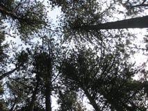 Tapa de árboles Fotografía de archivo libre de regalías