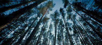 Tapa de árboles en un bosque Fotos de archivo libres de regalías
