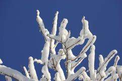 Tapa nevada del árbol Imagenes de archivo