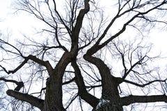 Tapa nevada del árbol Fotos de archivo libres de regalías