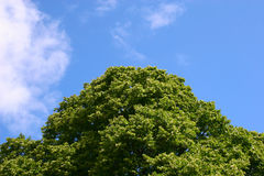 Tapas del árbol Imagen de archivo libre de regalías