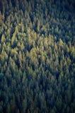 Tapas del árbol forestal Fotos de archivo libres de regalías