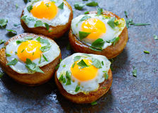 Tapas mushrooms with quail eggs from Spain Stock Image