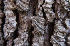 Tapet av trädskället Arkivfoto