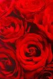Tapet för röda rosor Arkivfoto
