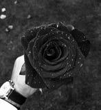 tapeta czarną różę Zdjęcia Royalty Free