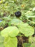 Tapeta, kwiaty obraz stock