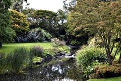 Tapeta - natury tło Obraz Royalty Free