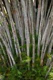 Tapeta z lasowym motywem