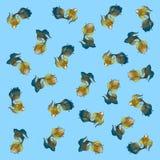 Tapeta z tęczy ryba Fotografia Royalty Free