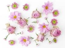 Tapete, Beschaffenheit Rosafarbene Blumen auf weißem Hintergrund Flache Lage, Draufsicht Lizenzfreie Stockfotografie