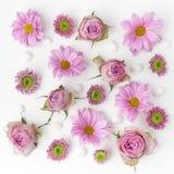Tapete, Beschaffenheit Rosafarbene Blumen auf weißem Hintergrund Flache Lage, Draufsicht Lizenzfreies Stockfoto