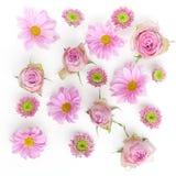 Tapete, Beschaffenheit Rosafarbene Blumen auf weißem Hintergrund Flache Lage, Draufsicht Stockfotografie