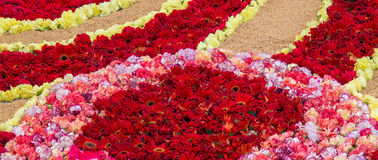 Tapete Corpus Christi da flor Fotografia de Stock Royalty Free