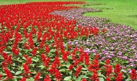 Tapete da flor Imagens de Stock Royalty Free