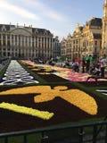 Tapete da flor Bruxelas 2016 foto de stock