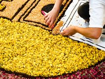 Tapete da flor fresca real imagem de stock
