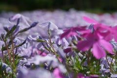 Tapete das flores Imagem de Stock Royalty Free