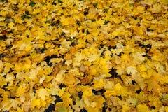 Tapete das folhas caídas imagens de stock royalty free