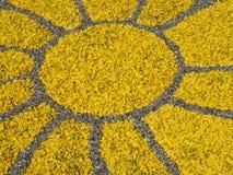 Tapete das pétalas reais da flor fresca imagem de stock royalty free