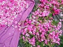 Tapete de flores fotos de stock royalty free