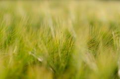 Tapete der Weizenährchen Lizenzfreies Stockbild