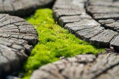 Tapete do musgo e da madeira Imagens de Stock Royalty Free